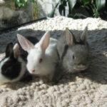 Bunny World Foundation