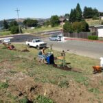 Benicia Tree Foundation
